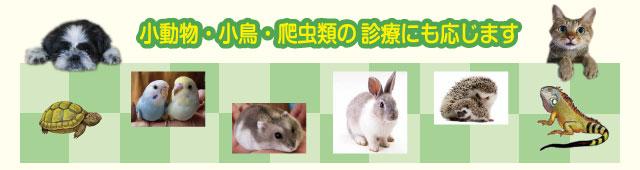 診療できる動物